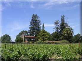 Northfield Wines Napa and Waipara